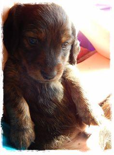 Hazels puppy LeRoy
