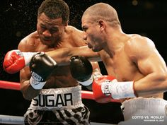 Sugar Shane Mosley for WBA welterweight title. Miguel Angel Cotto, Miguel Cotto, Hbo Boxing, Boxing News, Sugar Shane Mosley, Boxing Highlights, World Boxing, Boxing Champions, Love Box