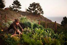 Tending the kitchen garden. Diy Garden, Edible Garden, Dream Garden, Summer Garden, Ed Wallpaper, A Well Traveled Woman, Farm Gardens, Agriculture, Farming