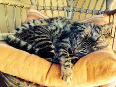 Closeness cats