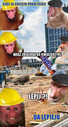 Funny Lyrics, Polish Memes, Poland, Lol, Fun