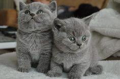Ciesz się życiem: Kotki