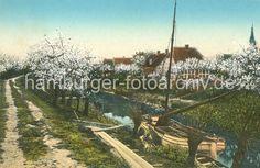 Historisches Bild von der Lühe / Altes Land Blühende Obstbäume - ein Ewer liegt am Flussufer. 016_1_214 Fachwerkhäuser stehen am Ufer der Lühe - Kirschbäume blühen; ein Ewer liegt vertäut zwischen Kopfweiden im Schilf, die Seitenschwerter sind hochgezogen - Planken führen als Weg zum Lastschiff. Fast jeder Obsthof transportierte seine Obsterne mit dem Lastsegler über Elbe zumeist auf den Markt nach Hamburg.