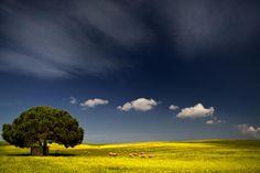 The Land of Maremma: Photo by Photographer Francesco Martini - photo.net