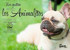 Cartel para la protectora de animales Apa Huella de Esperanza