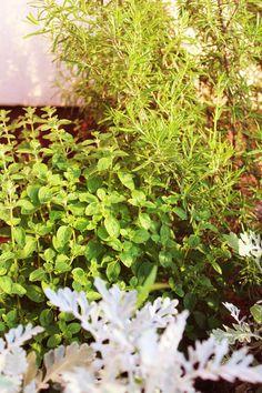 My herb garden in June