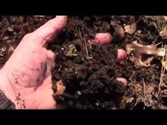 BACK TO EDEN USING LEAVES AND WEED CONTROL TIPS - YouTube
