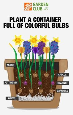 This Layering Technique Guarantees a Steady Stream of Colorful Spring Blooms How to Layer Spring Bulbs - Layering Spring Bulbs in Pots Diy Garden, Spring Garden, Lawn And Garden, Garden Ideas, Garden Cafe, Garden Cottage, Rooftop Garden, Garden Bed, Indoor Garden
