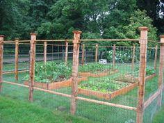 Cheap garden fence ideas chicken fence ideas wire garden fence chicken wire around garden chicken wire . Cheap Garden Fencing, Diy Garden Fence, Raised Garden Beds, Raised Beds, Fenced Vegetable Garden, Vegetable Garden Design, Fenced Garden, Gardening Vegetables, Farm Gardens