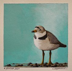 Small bird painting, Plover painting, Shorebird painting, Original bird art, Small bird art, 6x6 inch acrylic painting within an 11x14 mount Crow Painting, Original Artwork, Original Paintings, Small Paintings, Small Art, Small Birds, Affordable Art, Bird Art, Online Art