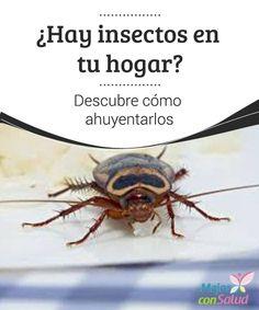 ¿Hay insectos en tu hogar? Descubre cómo ahuyentarlos  Los insectos no suelen ser de los animales más queridos. Y es que hay pocas cosas más molestas que despertarte en mitad de la noche por el zumbido de un mosquito que sobrevuela sobre tu cabeza.