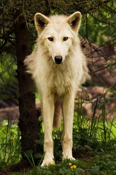 Wolves...I don't even have words for them.