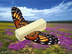 THE REAL BUTTERFLY - by beyonceboy  Worth1000 Contests