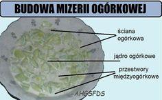 Mikroblog - Wykop.pl - strona 5