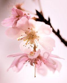 pink by jyoujo.deviantart.com