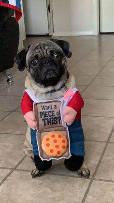 """Explore our website for even more information on """"pug puppies"""". It is actually an exceptional area to find out more. Pugs In Costume, Cute Costumes, Dog Costumes, Halloween Costumes, Pug Accessories, Cute Pugs, Funny Pugs, Baby Pugs, Pug Pictures"""