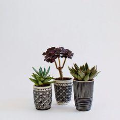 blomma: Succulent Inspiration