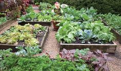 P. Allen's Grocery Garden