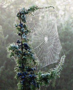 Beautiful spider web, added as art in nature! Art Et Nature, All Nature, Amazing Nature, Science Nature, Nature Water, Pics Art, Natural Wonders, Belle Photo, Mother Earth