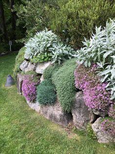 Love this wall Garden Edging, Garden Borders, Garden Pots, Shade Landscaping, Garden Landscaping, White Trellis, Climbing Hydrangea, Sloped Yard, Evergreen Garden