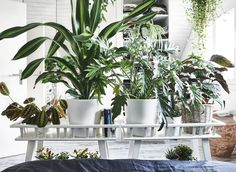 The Advantages Of Growing Food Indoors With Hydroponic Gardening Indoor Plants Online, Best Indoor Plants, Cool Plants, Green Plants, Houseplants Safe For Cats, Ikea Plants, Rue Verte, Plant Zones, Plant Wallpaper
