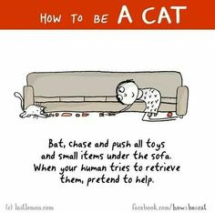 HOW TO BE A CAT: Bat, chase and push all toys and small items under the sofa. When your human tries to retrieve them, pretend to help. Crazy Cat Lady, Crazy Cats, I Love Cats, Cool Cats, How To Cat, Cat Comics, Photo Chat, Cat People, Cat Quotes