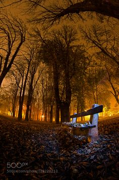 Bench by socaciumarcel #fadighanemmd