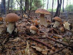 NAŠE KUCHYNĚ: Houbové recepty Mushroom Art, Zentangle, Stuffed Mushrooms, Food And Drink, Vegetables, Fungi, Mushrooms, Recipes, Mushroom