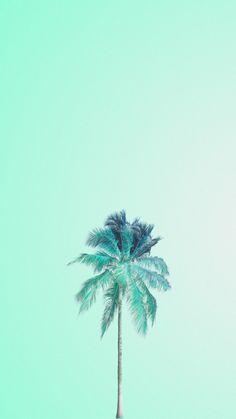Mojito palm