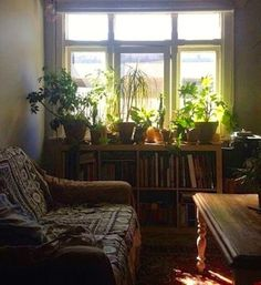 House Plants in comfy living room