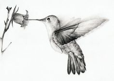 Hummingbirds Bing, Humming Bird Tattoos, Awesome Drawings, Hummingbird Drawing, Pencil Drawings Of Birds, Hummingbirds Pencil, Hummingbird Sketch