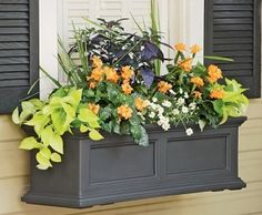 I like the style of these window boxes.chartreuse devil's ivy (Pothos), orange firecracker flower (Crossandra infundibuliformis), dracena spikes, purple ornamental peppers and white daisies (Argyranthemum 'Molimbo White') Wooden Window Boxes, Wooden Windows, Front Windows, Porch Windows, Bedroom Windows, Front Porch, Window Box Flowers, Window Box Plants, Fall Window Boxes