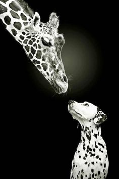 Just because our spots are a different shade and shape doesn't mean we can't be friends..:)                                                                                                                                                      More