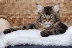 Karmy dla kotów alergików:  http://www.kakadu.pl/Karmy-dla-kotow/karmy-dla-kotow-alergikow.html