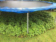 problem is solution : wild strawberries as groundcover under the trampoline Garden Trampoline, Best Trampoline, Kids Backyard Playground, Backyard For Kids, Backyard Ideas, Trampolines, Back Gardens, Outdoor Gardens, Outdoor Fun