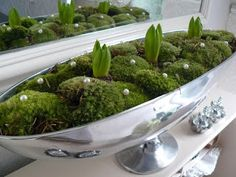 decoration with moss