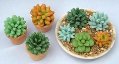 Air Dry Clay Tutorials: Make a Miniature Succulent Plant 2019 Air Dry Clay Tutorials: Make a Miniature Succulent Plant The post Air Dry Clay Tutorials: Make a Miniature Succulent Plant 2019 appeared first on Clay ideas. Miniature Plants, Miniature Fairy Gardens, Planting Succulents, Planting Flowers, Succulent Plants, Cacti Garden, Mini Plants, Polymer Clay Miniatures, Dollhouse Miniatures