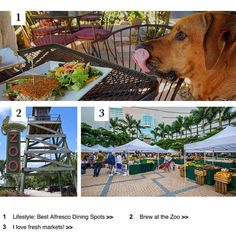 Brew at the zoo Alfresco dining and farmers market. So much to do so little time!  . . .  1. http://ift.tt/2cToeYr  2. http://ift.tt/2cKFCl2  3. http://ift.tt/2cTnPVX . . . jennifer@thechadcarrollgroup.com (305) 525-6769  http://ift.tt/1XpMFN6 . . #JennySellsMiami #RealtorJenniferGomez #thecarrollgroup #douglaselliman #ellimansfl #miami #miamirealestate #luxuryrealestate #yourrealtor #welcomehome #milliondollarlisting #experience #forsale #palmbeach #highendrealestate #sold #sellinghomes…