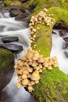 Mushrooms, Snowdonia, Wales