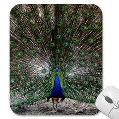 Peacock plume mousepad by Imaginative Imagery. $10.95  http://www.zazzle.com/peacock_gifts_peafowl_mousepads_feathers_picture-144514581820637524?rf=238222133794334761