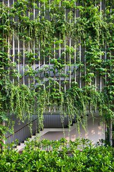 Plants climb all over vertical concrete