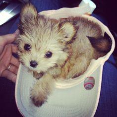 Chillin in my hat ;)