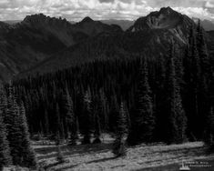 A landscape photograph of an alpine meadow at Mount Rainier National Park, Washington with Tamanos Mountain and Governors Ridge in the background. The post Alpine Meadow, Washington, 2019 appeared first on Pacific Northwest Landscape Photography. Alpine Meadow, Mount Rainier National Park, Black And White Landscape, Landscape Photographers, Pacific Northwest, Sunrise, National Parks, Washington, Mountain