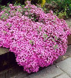 Plantation, Plants, Gardens, Organic Fertilizer, Organic Matter, Trees And Shrubs, Growing Weed, Perennial Plant, Rose Bush