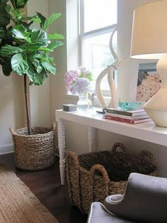 Fiddle Leaf Fig tree - pretty indoor tree.  Too bad I kill green things.