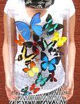 Butterfly, Butterflies in Acrylic cases, preserved butterflies, spread butterflies, dried