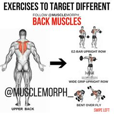BACK EXERCISE https://musclemorphsupps.com/
