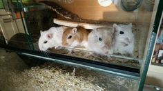 Four brothers begging for a treat Gerbil, Brother, Animals, Animales, Animaux, Animal, Animais