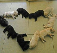 I want them all.