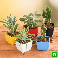 Take a look at the blooming cacti and succulents packs and tell us which one is your favorite. Flowering Succulents, Cacti And Succulents, Planting Succulents, Planting Flowers, Jade Plants, Fruit Plants, Cactus Plants, Planter Accessories, Crassula Ovata